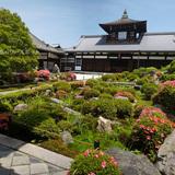 東福寺 開山堂のサツキ