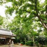 神足神社の写真