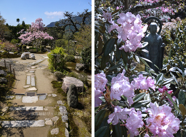 実光院の桜
