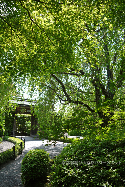 妙心寺退蔵院