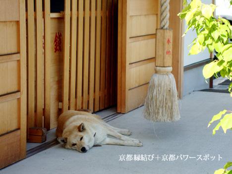 縣神社の犬