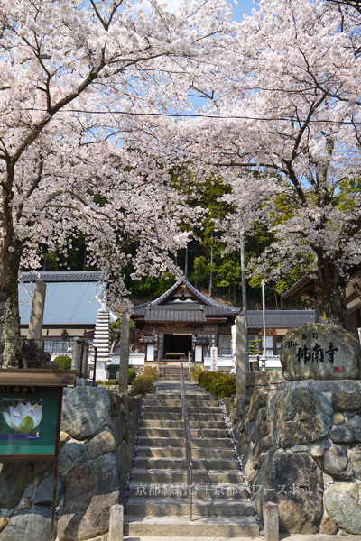 佛南寺の桜