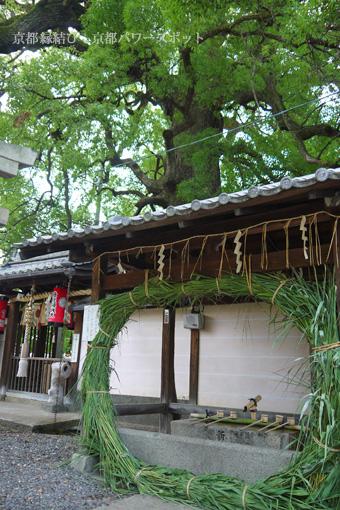 新熊野神社の茅の輪