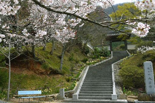 大圓寺の桜