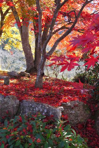 大圓寺の紅葉
