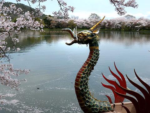 大覚寺大沢池の桜