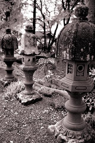 洞玄寺の牡丹