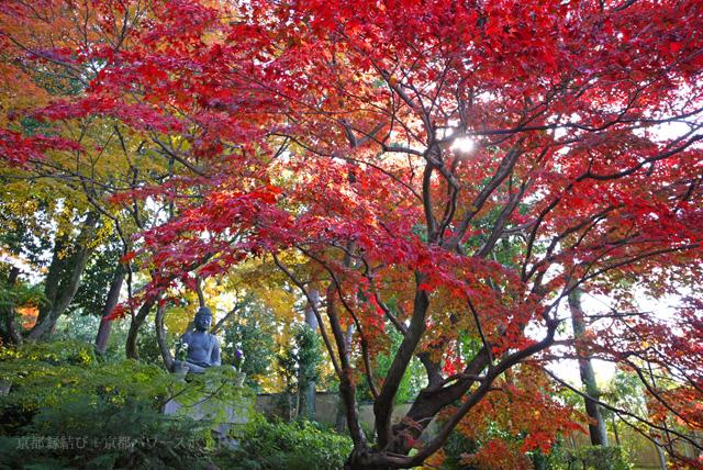 金戒光明寺 栄摂院の紅葉