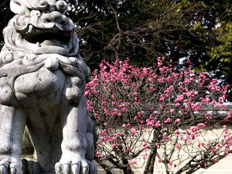 建勲神社の梅