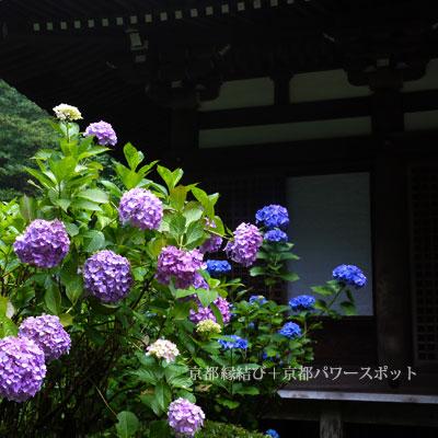 岩船寺のあじさい