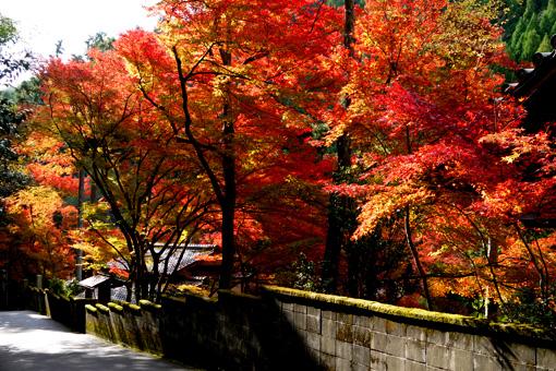吟松寺の紅葉