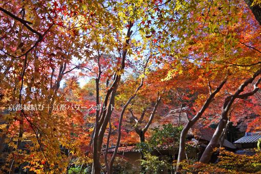 祇王寺の散り紅葉
