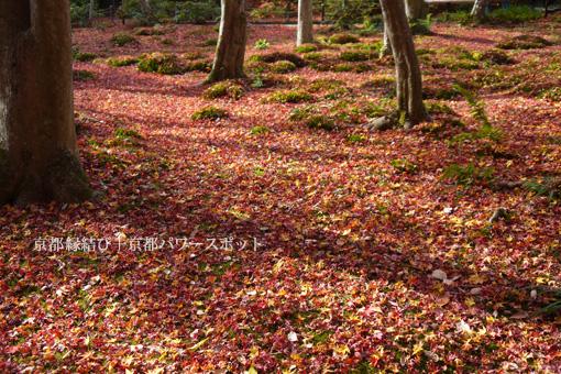 祇王寺の敷き紅葉