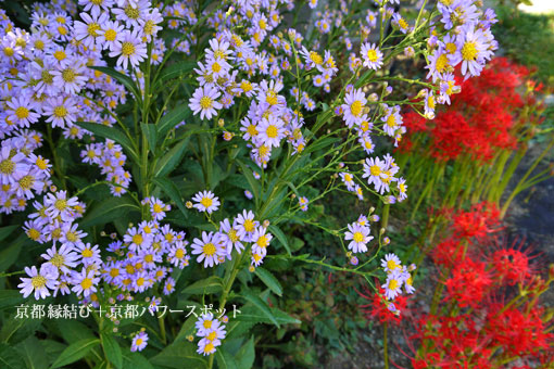 極楽寺の彼岸花