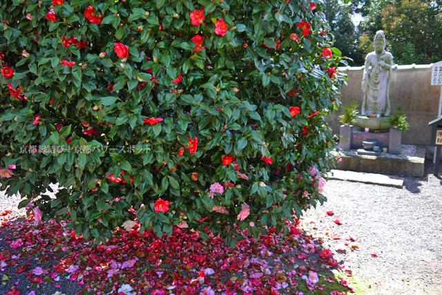 宇治 橋寺放生院の桜