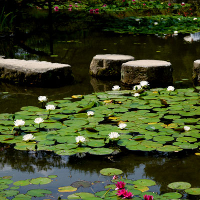 平安神宮神苑の無料公開
