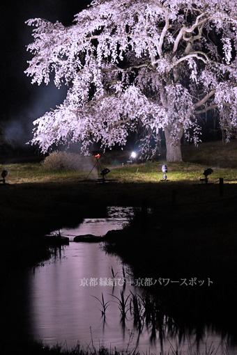 平安郷の桜