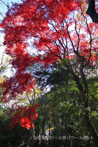 嵐山法輪寺の紅葉