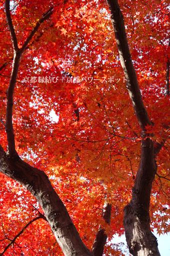 宝青庵 (もみじ寺) の紅葉