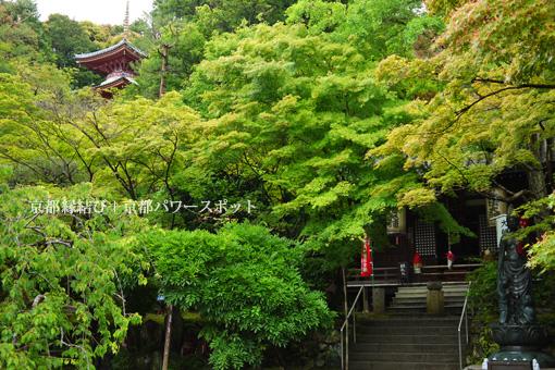 今熊野観音寺の青もみじ