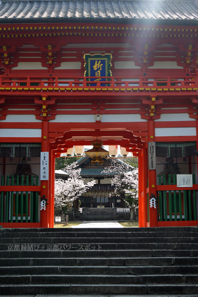 新日吉神宮の桜
