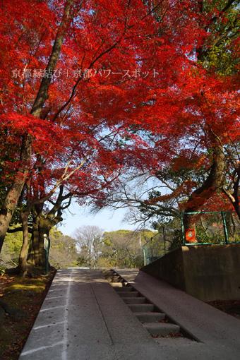 石清水八幡宮の紅葉