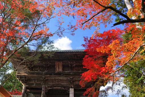 神護寺の紅葉