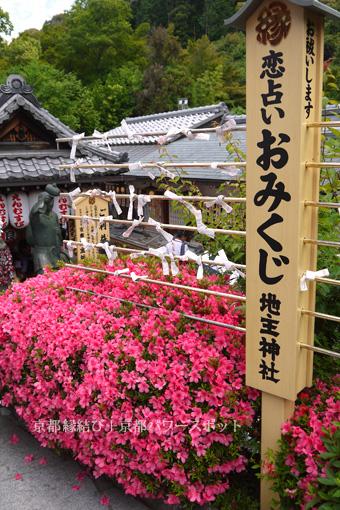 地主神社のサツキ