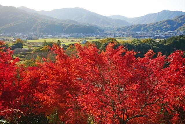 与謝野町 慈徳院の紅葉写真