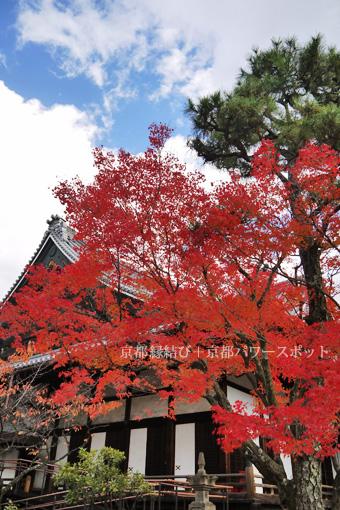 清浄華院の紅葉