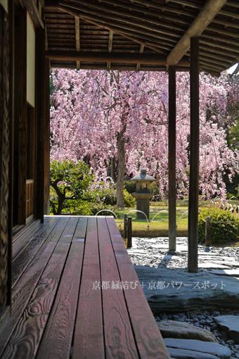 城南宮の枝垂桜