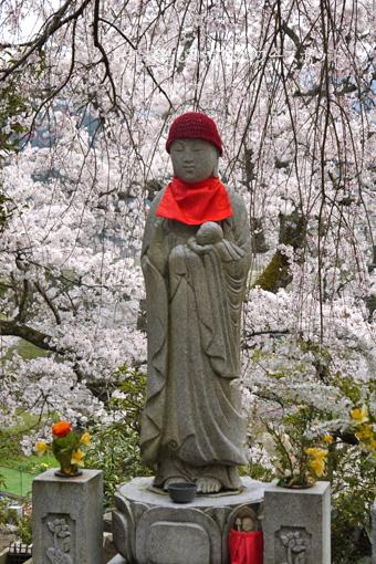 上林禅寺の桜