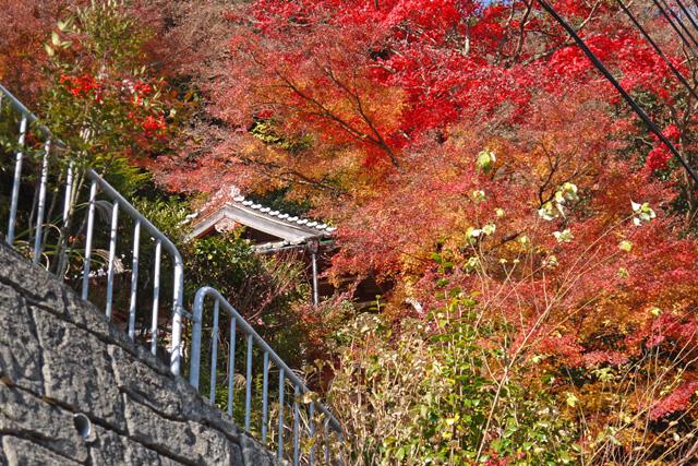 碊観音寺の紅葉