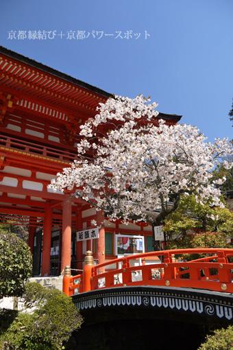 上賀茂神社の枝垂桜
