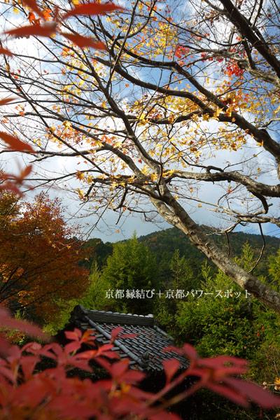 桂徳院の紅葉