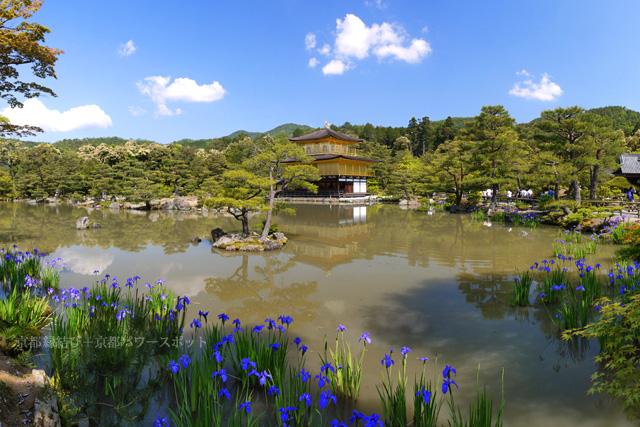 金閣寺のカキツバタ