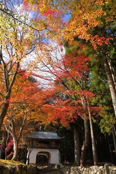 古知谷阿弥陀寺の紅葉