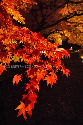 高台寺の紅葉ライトアップ