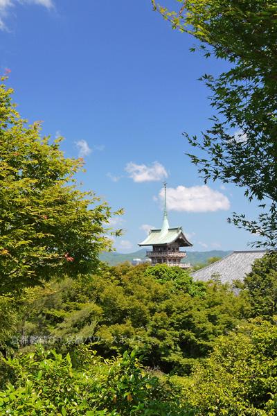 新緑の高台寺 祇園閣