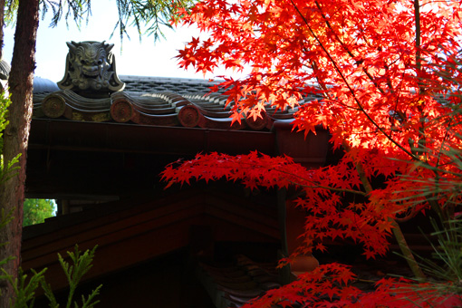 光悦寺の紅葉