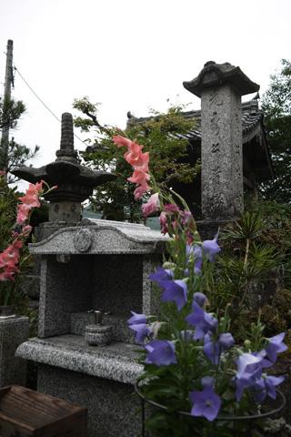谷性寺の桔梗