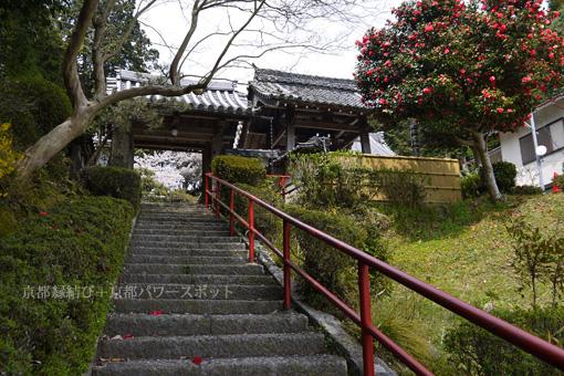 小松寺の桜