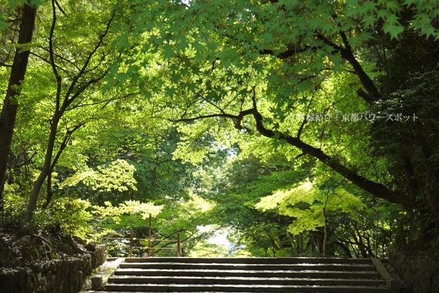 京都 光明寺の青もみじ