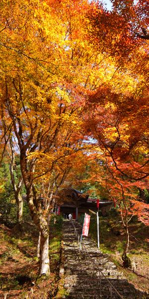 金剛院の紅葉