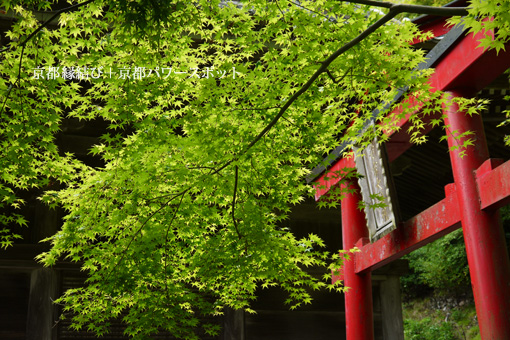 金蔵寺の青もみじ