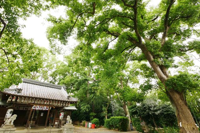 神足神社のクスノキ