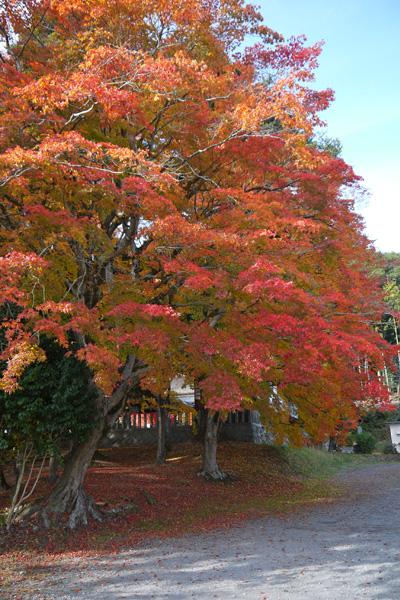 九手神社の紅葉