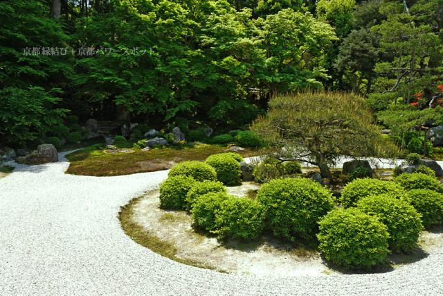 曼殊院のお庭