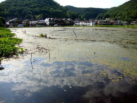 深泥池の写真
