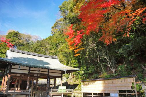 諸羽神社の紅葉
